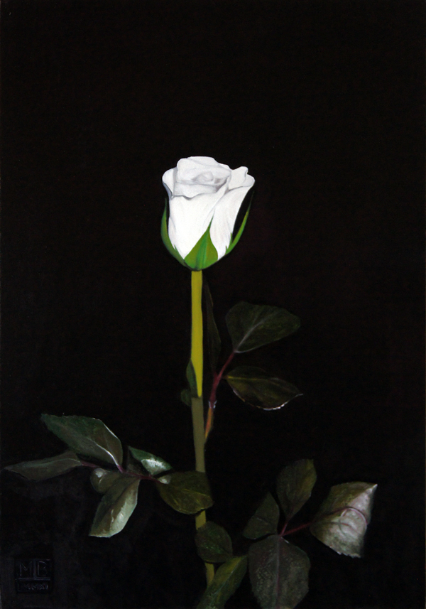 white rose an original oil painting by matthew bates. Black Bedroom Furniture Sets. Home Design Ideas