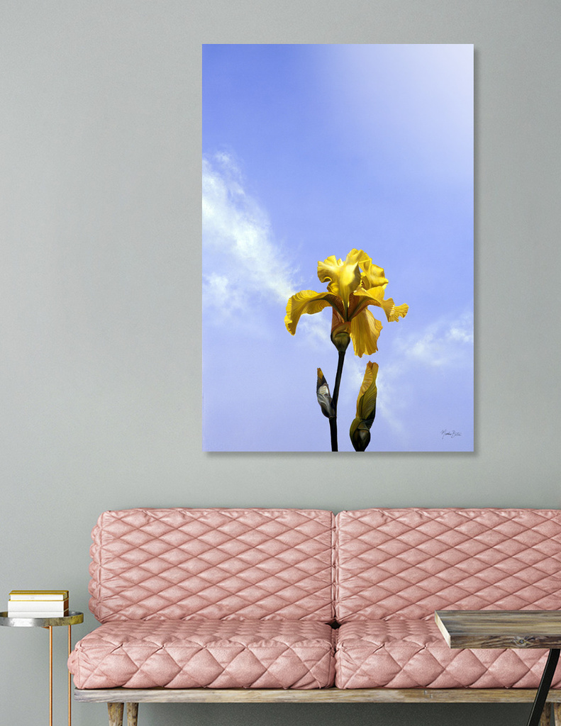 Yellow Iris - now available as a limited edition print!